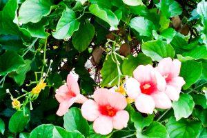 Flowers of Sicily